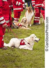 Rescue Dog Squadron in Germany