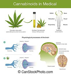 Research has found that cannabis indica plant can have the...