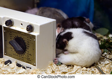 Research Mice - white with black research mice for...