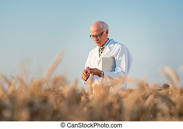 Researcher doing field test on new kinds of grain and wheat