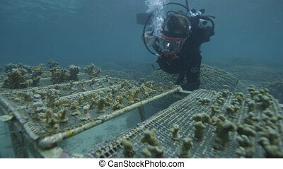 Researchers underwater for coral reefs - An underwater shot...