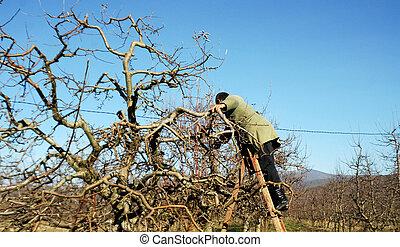 resen, macedonia., dezembro, 3, 2016-, agricultor, poda,...
