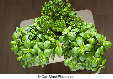 resh basil and parsley herb in flowerpots
