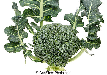 resh raw broccoli isolated on white background