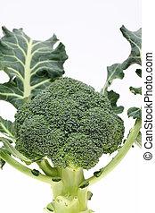 resh raw broccoli on white background