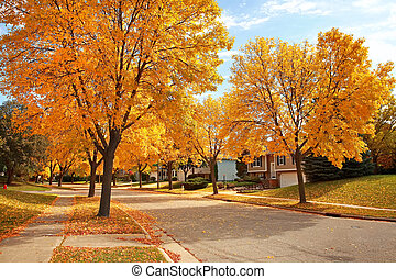 Residential Neighborhood in Autumn - residential street in...