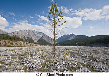 Resilient Tree - A lone poplar tree flourishes amidst a sea...