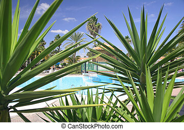 Swimming pool from behind tropical foliage