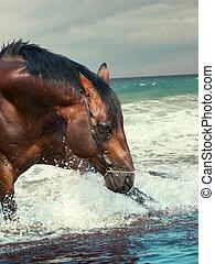 respingue, agradável, baía, raça, garanhão, em, a, mar