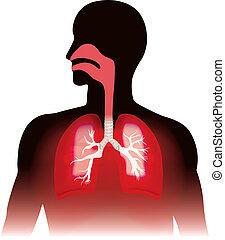 respiration., lungen, menschliche