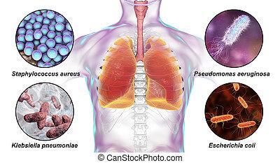 respiratorio, pathogens, humano