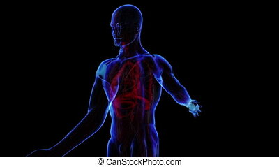 All human body systems. Transition body - respiratory system - body. Loop