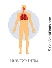 Breathing respiratory system isolated human anatomy vector lungs and trachea nasal cavities inhale and exhale anatomical structure medicine and healthcare respiration and breathe pulmonary sinus