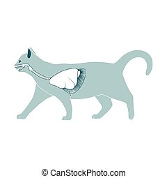 Respiratory system of the cat vector illustration -...