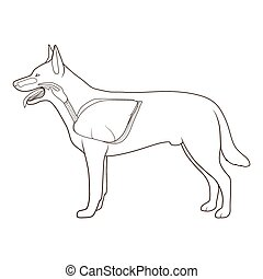 Respiratory system of the dog vector illustration - ...