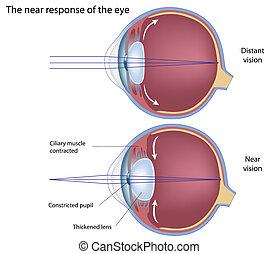 respuesta, eps8, ojo