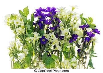ressorts, buisson, fleurs, premier