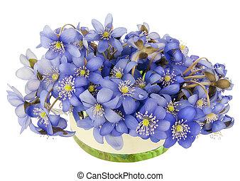 ressorts, buisson, fleurs, tache