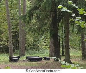 Rest area in coniferous forest. Empty benches waiting for...