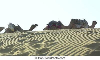 Rest break. - Camel caravan stopped to rest.