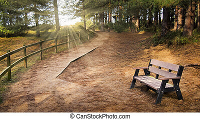 Serene rural path in the forest winding into the distance with an empty bench in the foreground and rays of light shining throught the trees