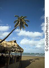 restauracja, plaża, dach, transoceaniczny przód, poszywany, ...