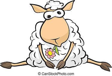 resting sheep - lamb sitting - sweet taste of laziness