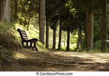 Resting spot on a forrest walk