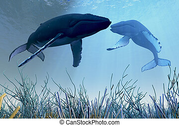 Resting Whales - Two Humpback whales rest and sleep over a...