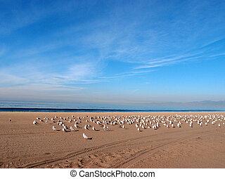 resto, la, gabbiani, occidentale, mare, gregge, spiaggia