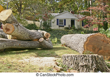 restos, carvalho, árvore velha