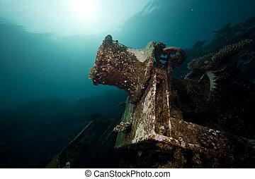 restos, de, el, kormoran, naufragio, y, hermoso, coral, crecimiento