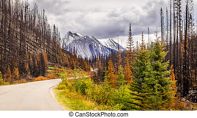 Results of a Forest Fire in Jasper - Results of a Forest...