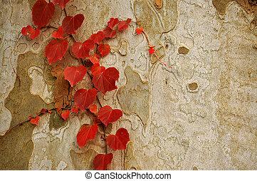 resumen, b, grayish, hojas, rojo