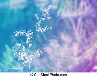 resumen, borroso, pasto o césped, flor, colorido, fondo., hermoso, flores, hecho, con, colorido, filters.