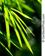 resumen, brumoso, natural, fondos, con, bambú, follaje