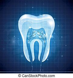 resumen, diente, sección transversal