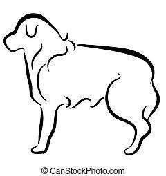 resumen, elegante, collie contiguo, perro, perfil