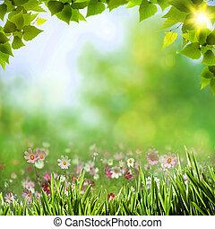 resumen, natural, fondos, con, belleza, bokeh