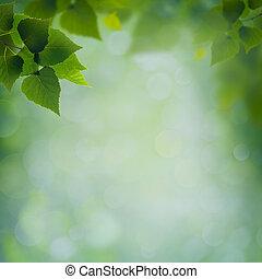 resumen, natural, fondos, con, follaje verde, y, belleza, bokeh