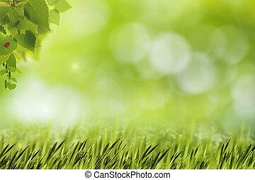 resumen, natural, fondos, con, hierba verde, abedul, follaje, y, belleza, bokeh