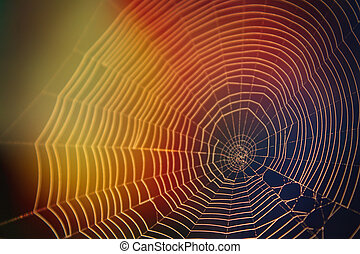resumen, naturaleza, fotografía, de, tela de araña, en, el, luz del sol, con, muchos colores