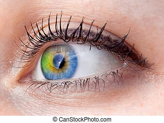 resumen, ojo humano