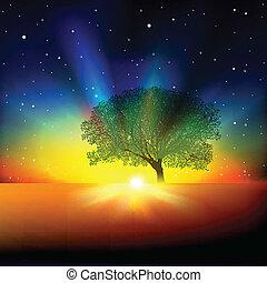 resumen, plano de fondo, con, árbol, salida del sol, y, estrellas