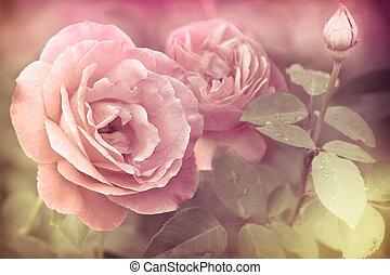 resumen, romántico, rosas rosa, flores, con, gotas del agua