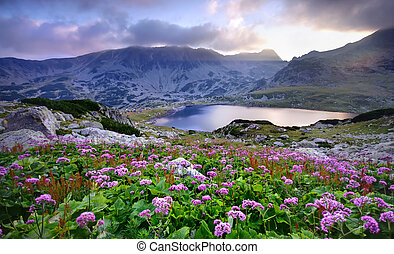 Retezat National Park with lake on mountain and flowers, Romania.