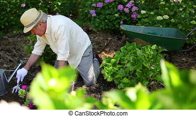 Retired man gardening in his backyard
