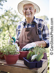 Retired old man replanting flowers in the garden