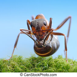 retoño, hormiga, listo, ácido, soldado