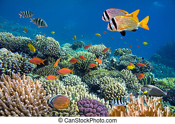 retoño, submarino, vívido, barrera coralina, peces